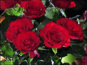 Šv. Valentino dienai artėjant